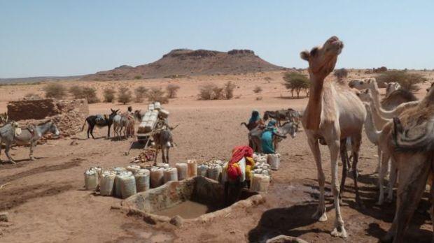 _87081247_sudan_camels_g
